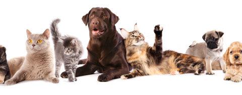 vetdom_veterinaire_narbonne_chiens