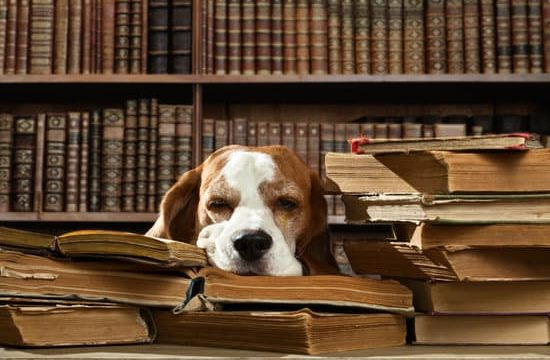 Very smart dog thinks in the library