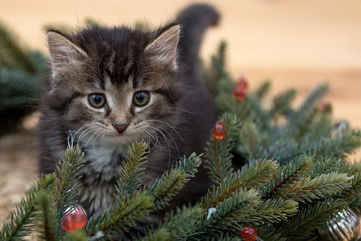 kitten-2965641__340