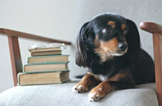 small dog sitting in an arm chair with a stack of books