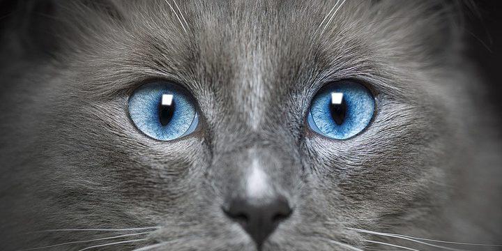 cat-4453822_960_720