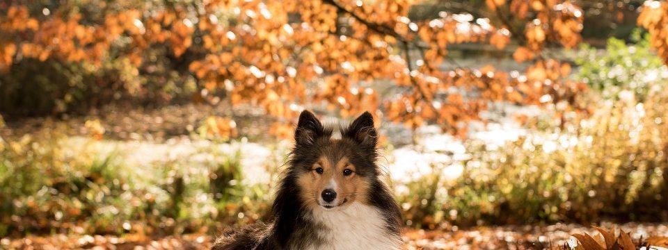 dog-1007594_960_720