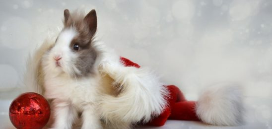 christmas-2959944_960_720