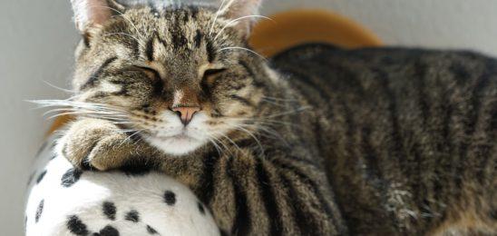 cat-2525341_960_720
